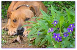 Alex in the purple flowers