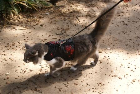 Kitty Holster on the go!