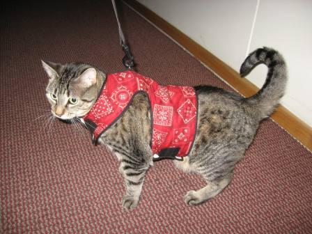 Walk your cat with the Kitty Holster!